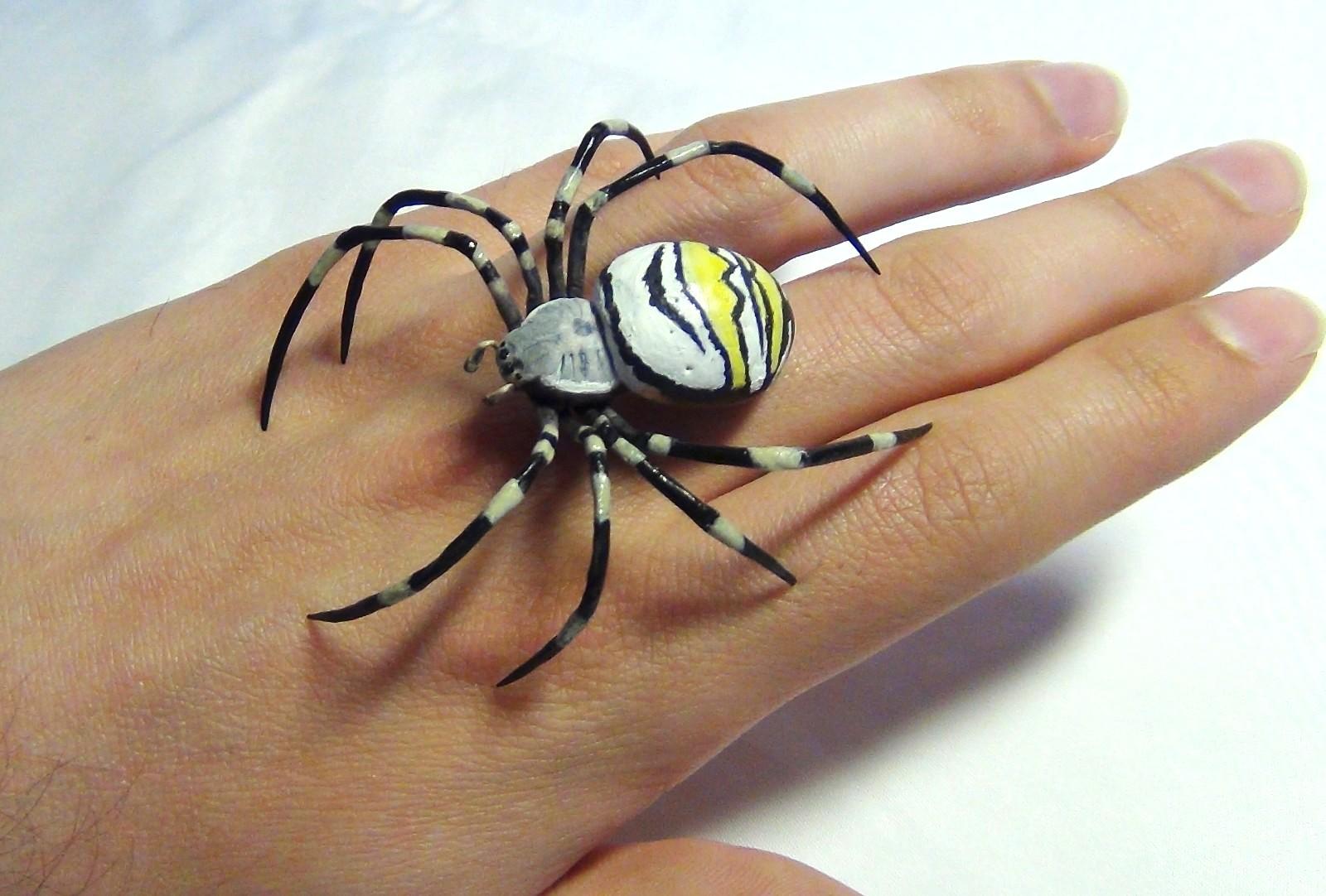 фото паука осы